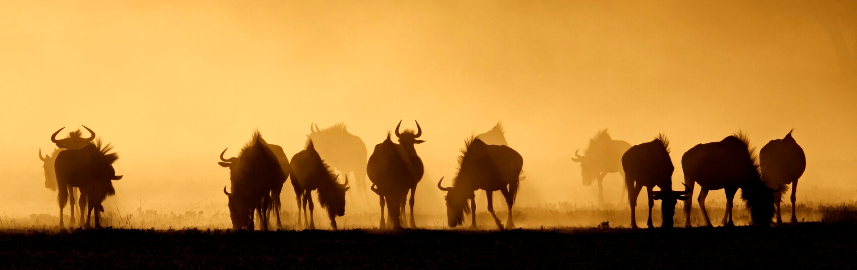 Blue-Wildebeest-in-Dust_Crop3